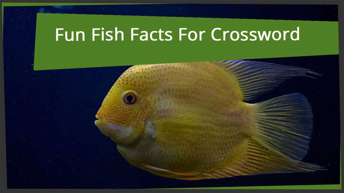 Fun Fish Facts For Crossword Puzzle Lovers Word Grabber Com