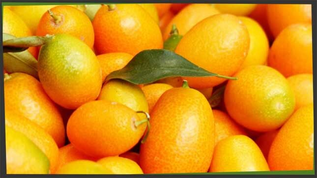 citrus fruit little kumquats