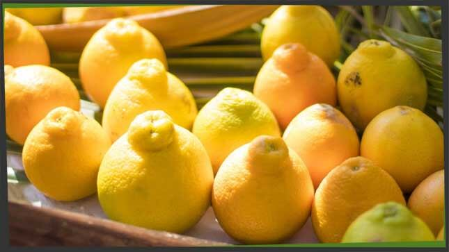 citrus fruit honeybell