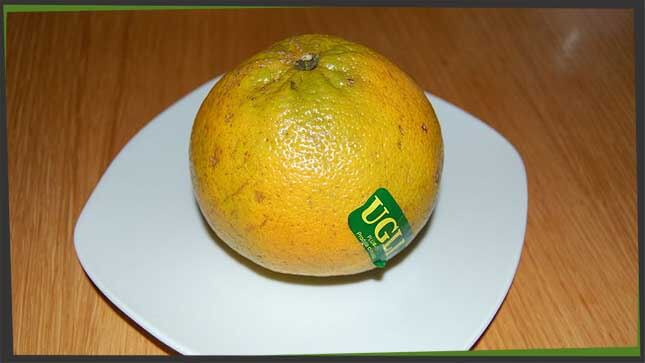 ugli is a citrus fruit